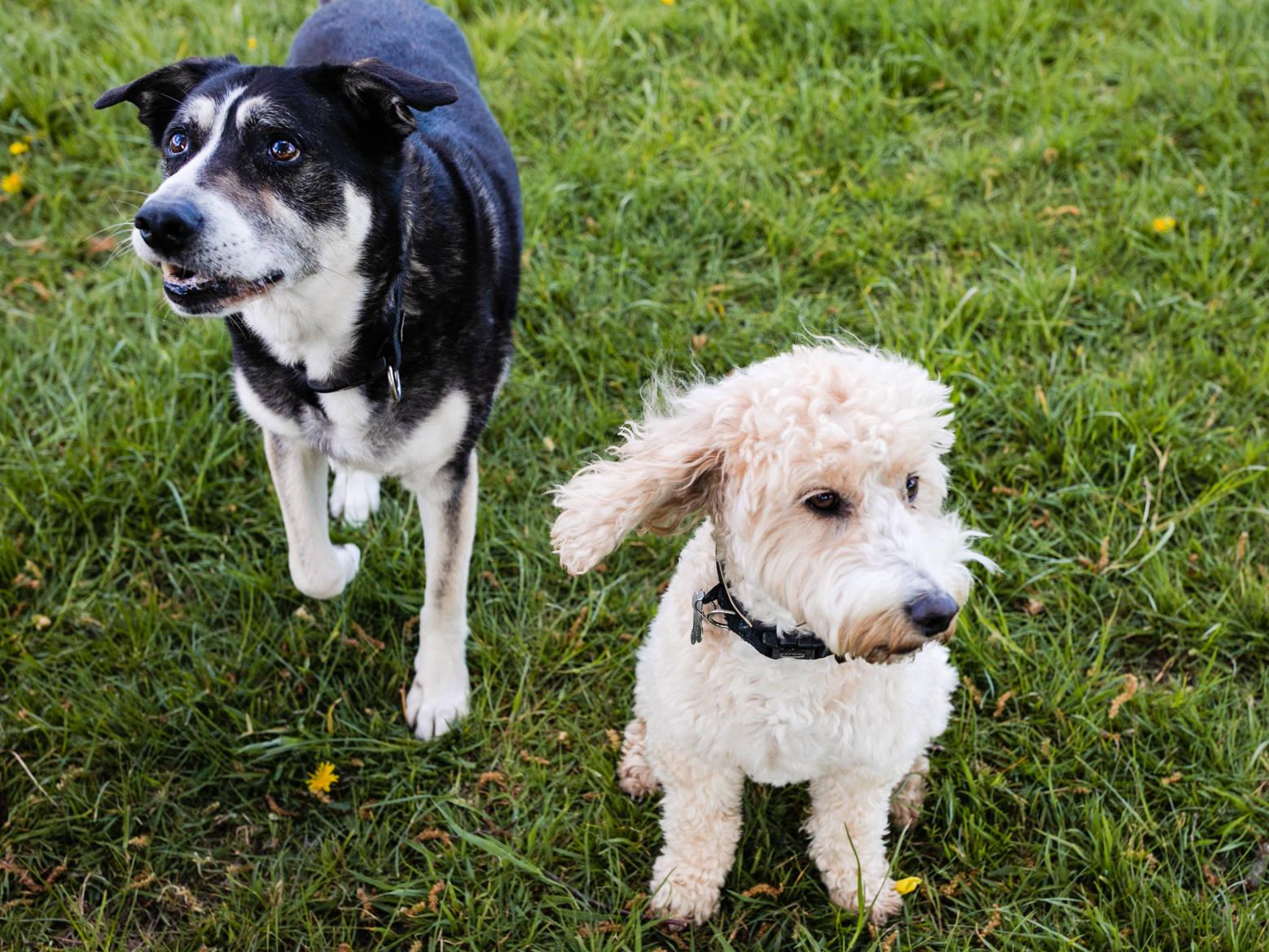 Dog walking school Kent