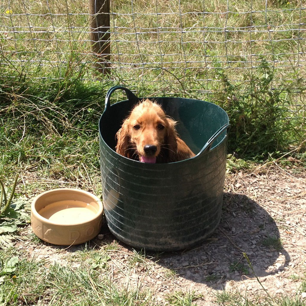 puppy sitting in a bucket
