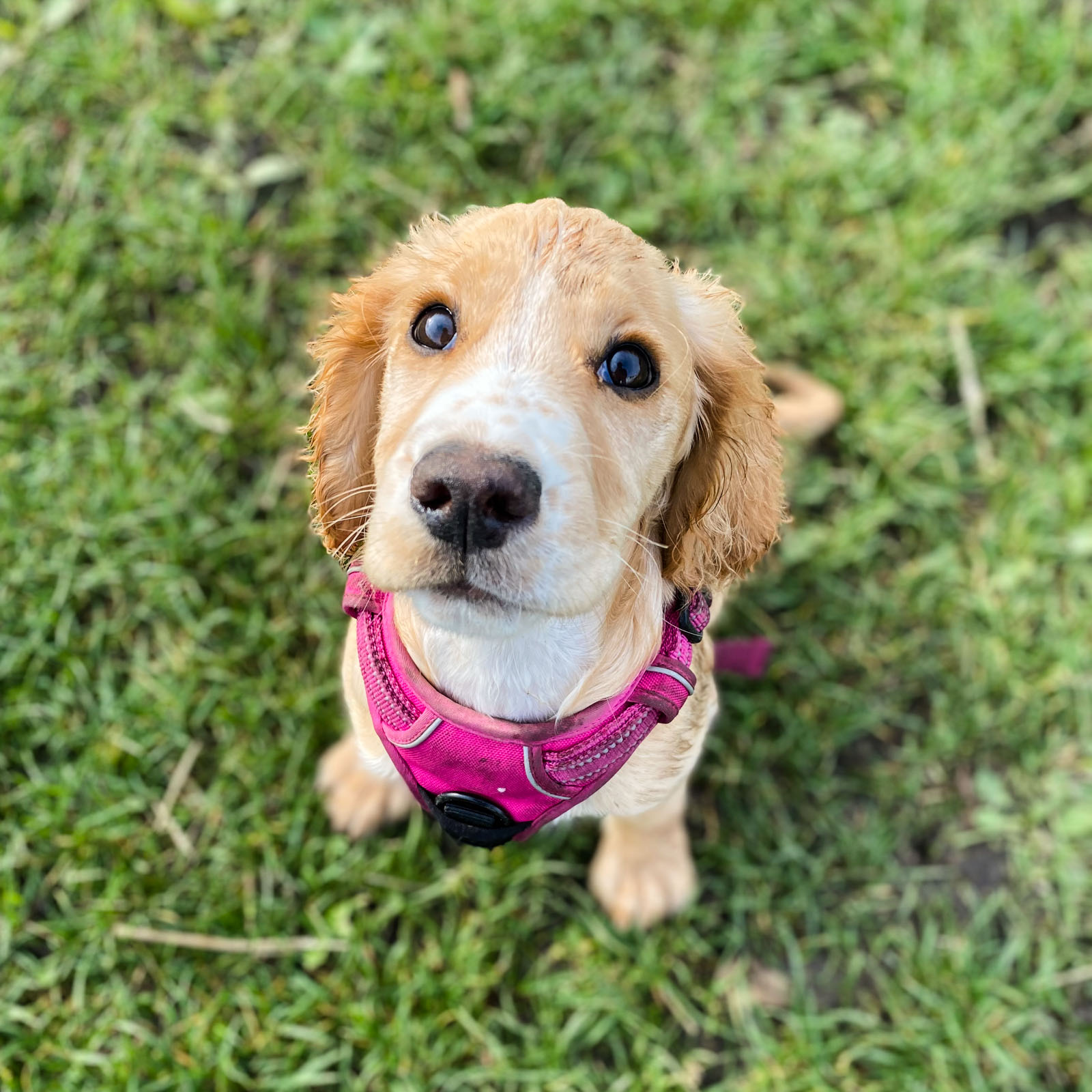 puppy training class kent
